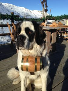perro de rescate san bernardo