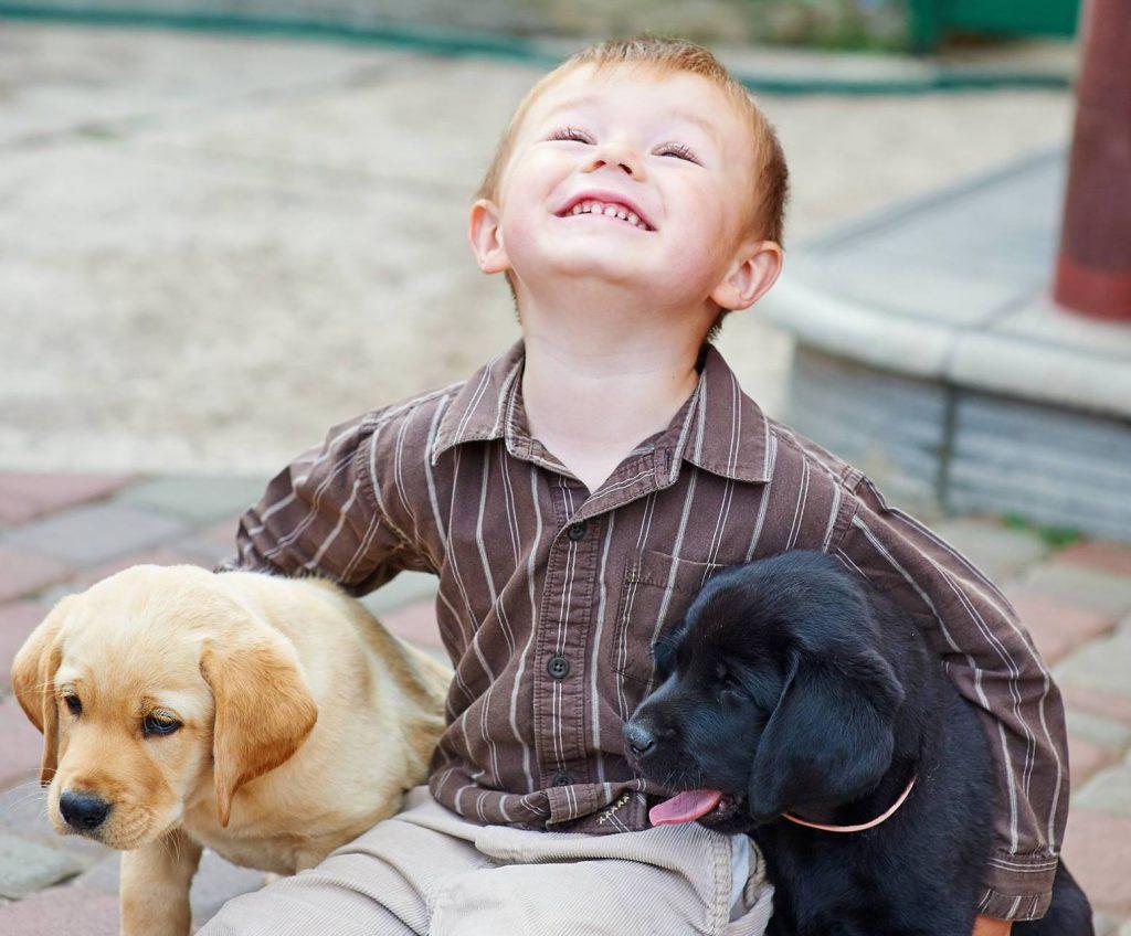 niño y cachorros