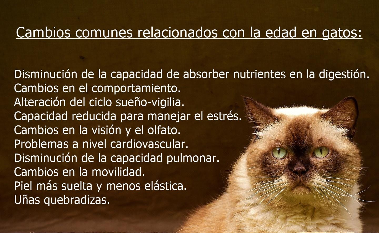 gato anciano recomendaciones