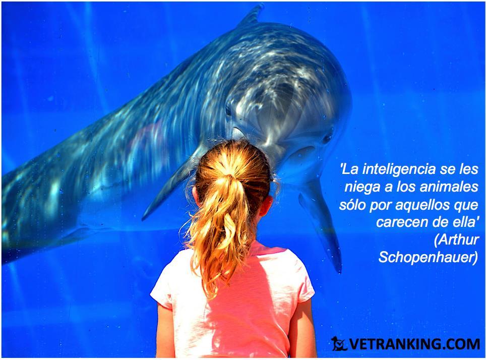 delfin y niña