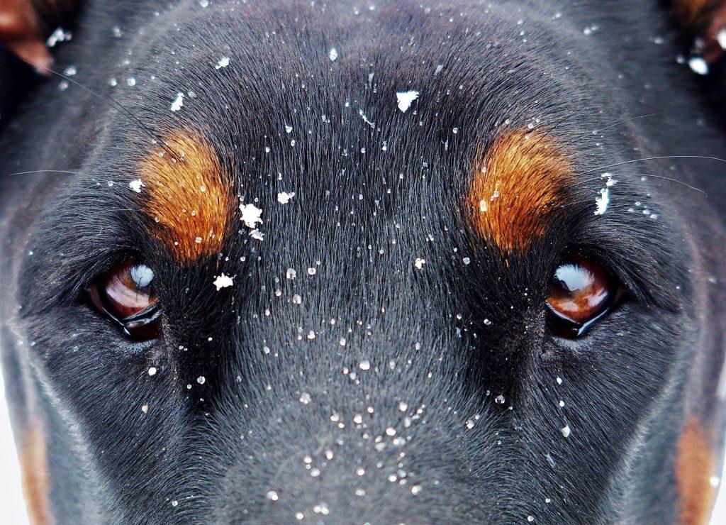 perro y nieve