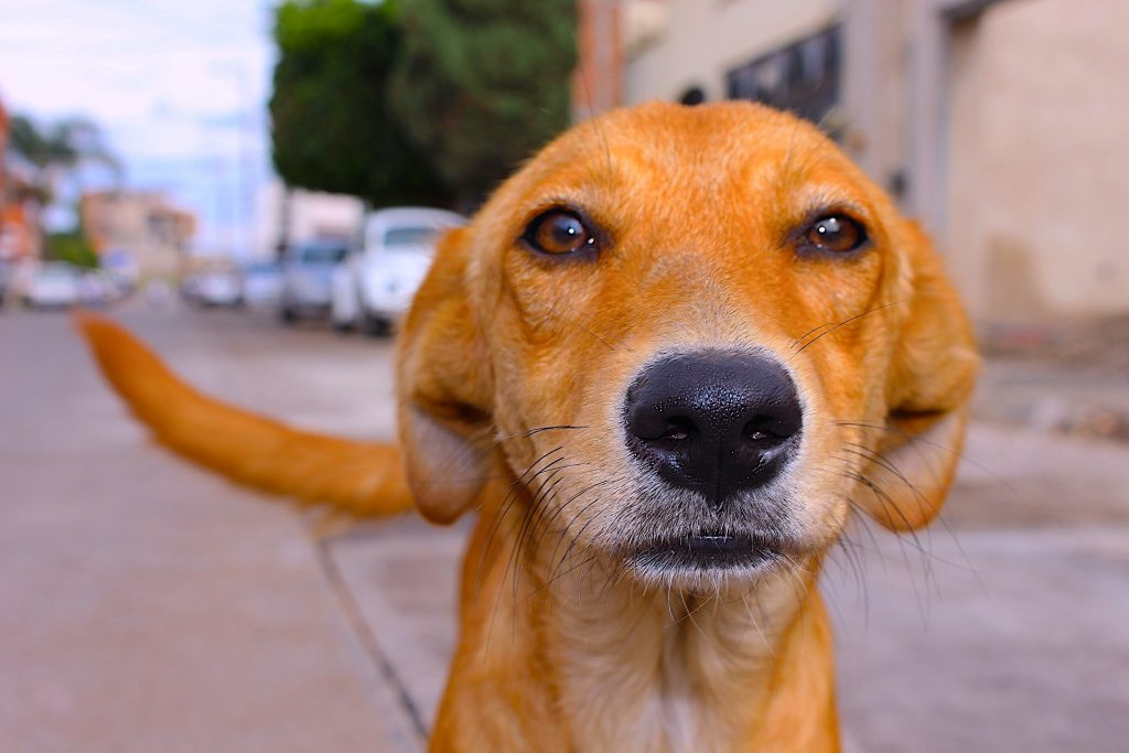 mirada-perro