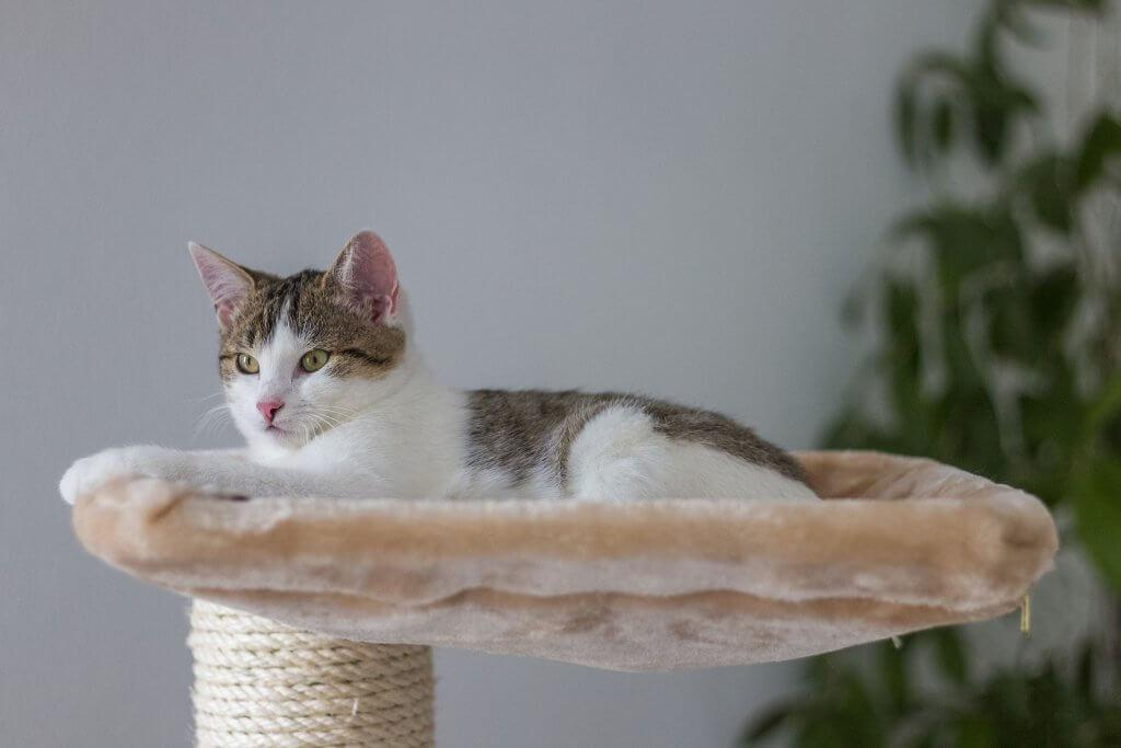 nuevo gato